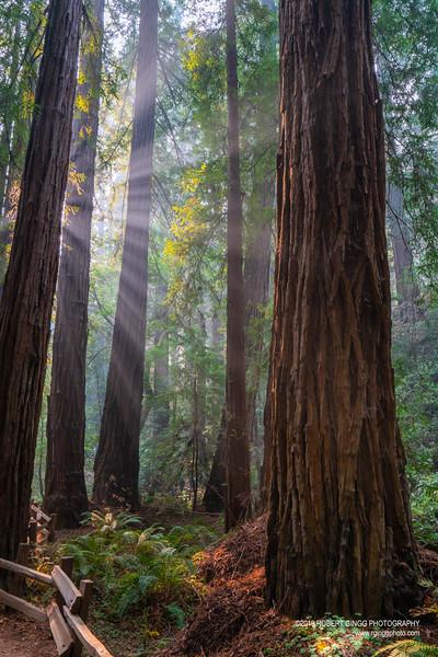 Muir Woods-7163.jpg