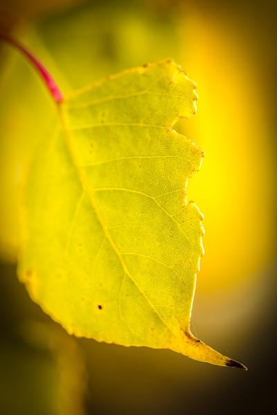 20151024-Fall Colors-50.jpg