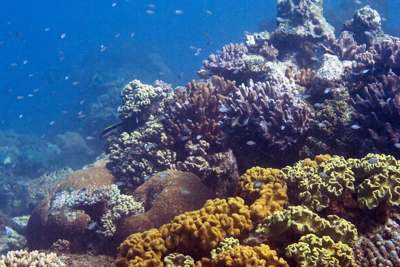 The Reef 1.jpg