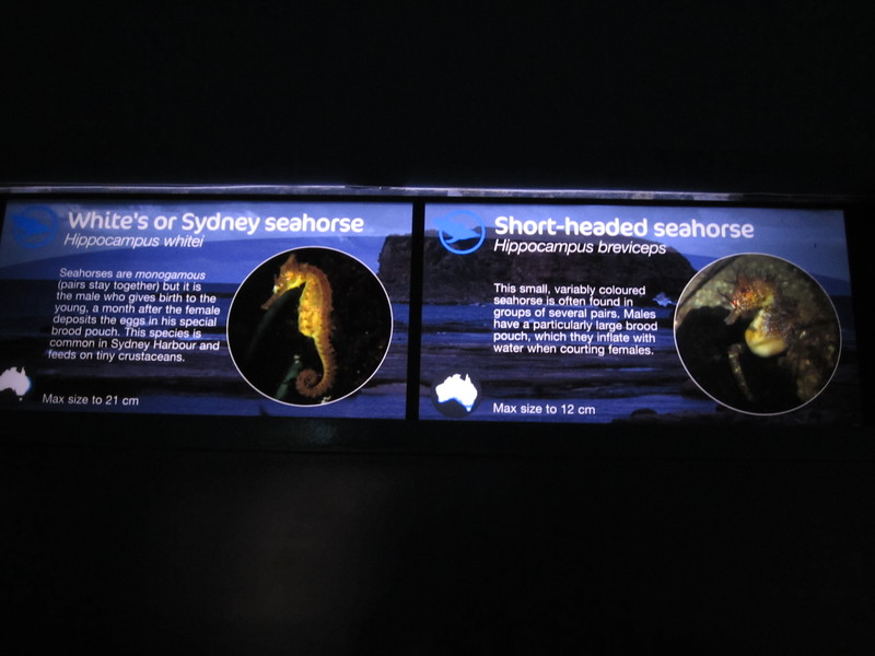 Sydney - Sydney Aquarium-56.JPG