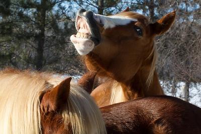 Horses for Slideshow