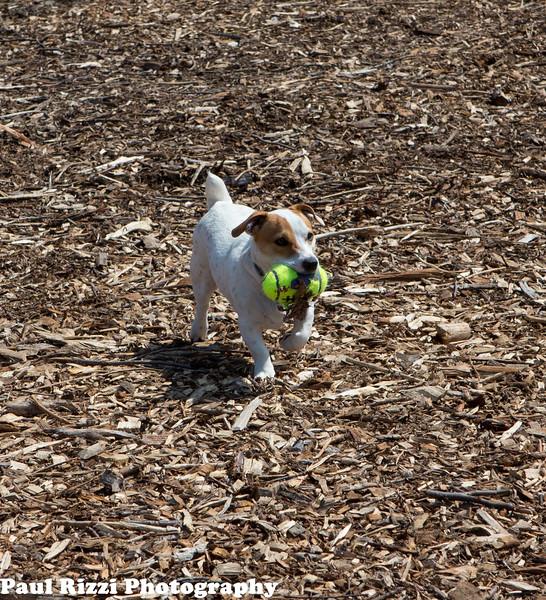 Dog Park-9466.jpg