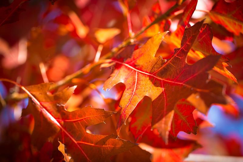 20151024-Fall Colors-66.jpg