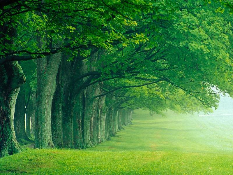 PlayWp-Nature (268).jpg