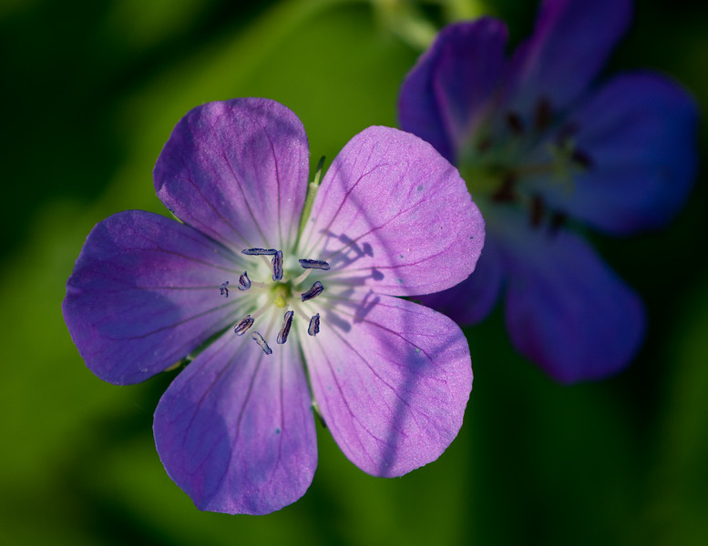 Botanical-05-05-10-39.jpg