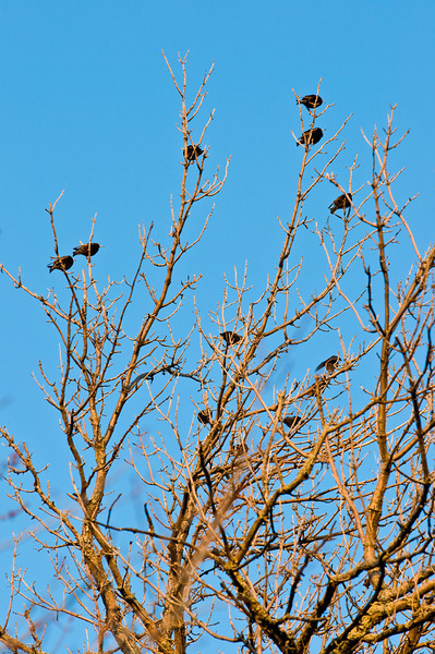 Late afternoon meeting. I have no idea what these birds are.