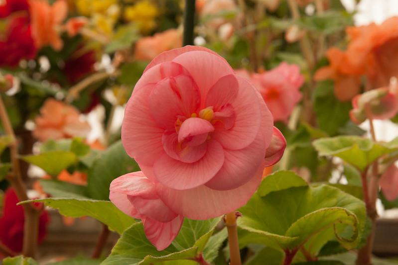 2009 09 06_White Flower Farm_0135.jpg