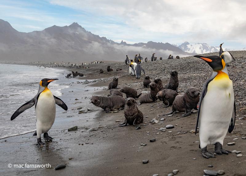antartica-21.jpg