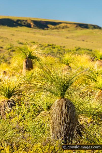 Grassy Landscape