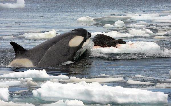 550111903-Antarctica-13.jpg