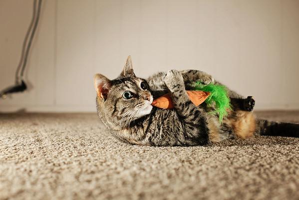 Catnip Carrot & Corn