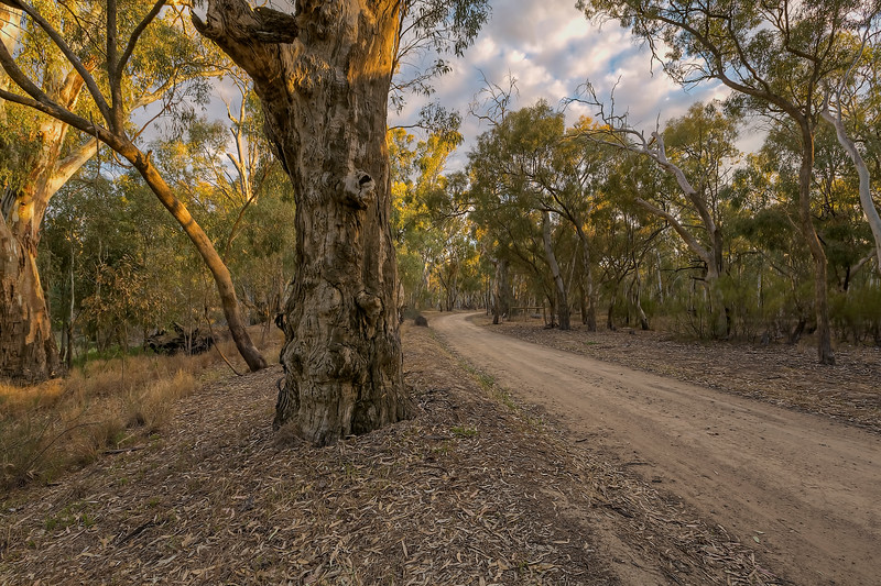 (2598) Murray River, Victoria, Australia