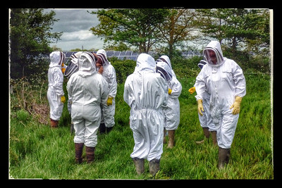 Cotswold Bees 2014