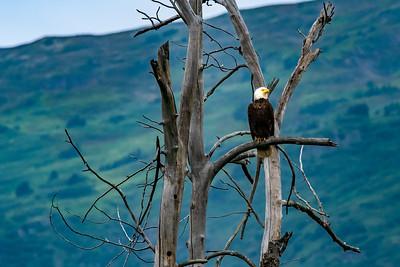 Bald Eagle Overseas Territory