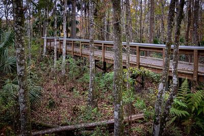 Ross Allen Island Boardwalk Through the Woods