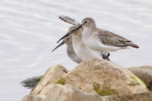 2017-11-04 Riverlands Migratory Bird Sanctuary