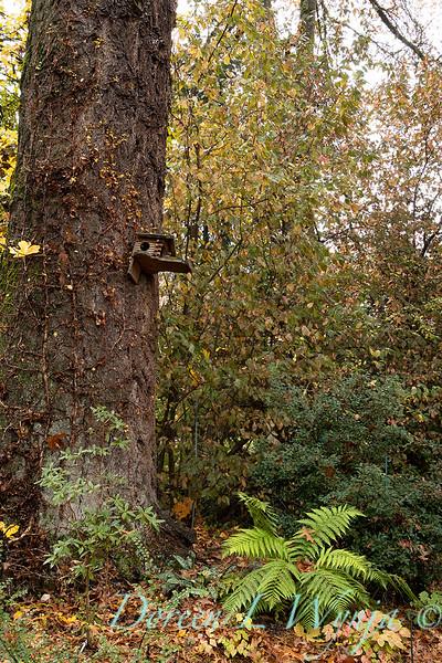 Dietrick fall garden_2058.jpg