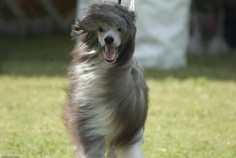 Boca Raton Dog Show-76.jpg