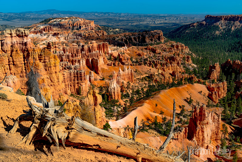 BRYCE LANDSCAPE WITH LOG V W COLOR--00707.jpg