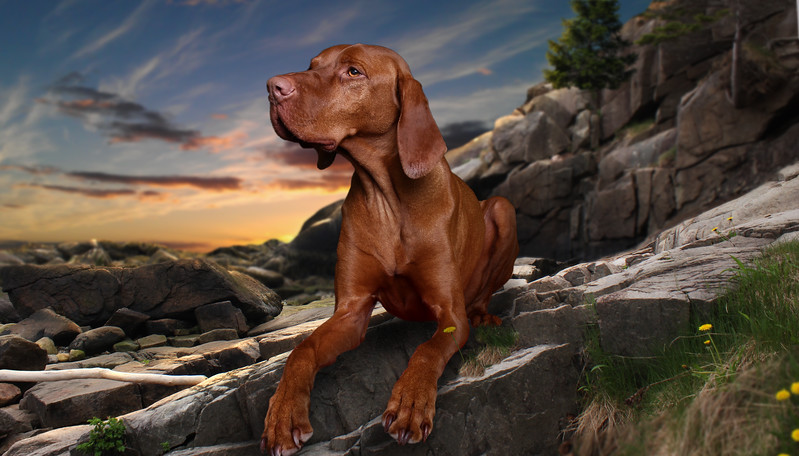 saule-dog-3.jpg