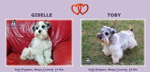 Giselle & Toby's Viper, DOB 5/17/2021