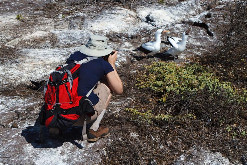 Photographing Nazca Booby pair at Prince Phillip Steps, Genovesa, Galapagos, Ecuador (11-25-2011) - 802.jpg