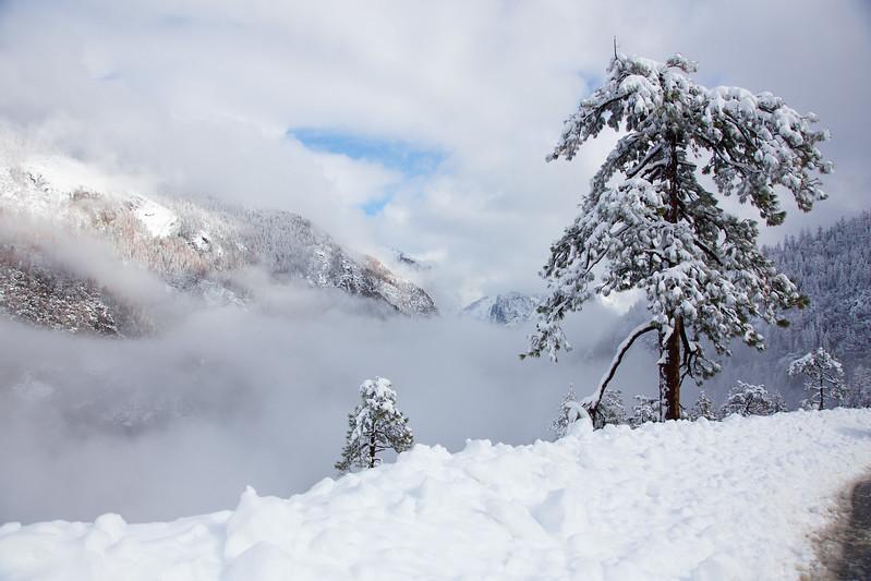 Family_012117_Yosemite_6160.jpg