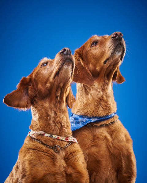 2016_12_24_Christmas Dogs4122.jpg