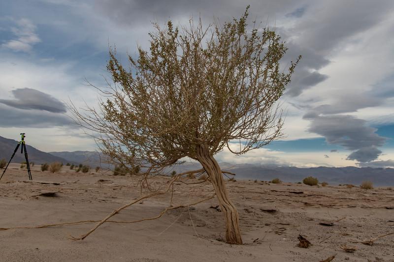 Bush-sand-dunes-death-valley-nationalpark.jpg