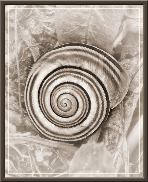 MCC4 Gail Marchessault Snail Shell.jpg