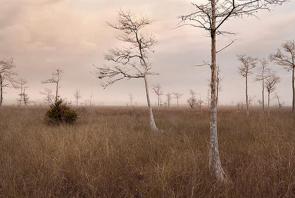 2008 Big Cypress Swamp