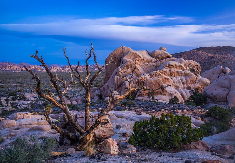 Hidden Valley View Joshua Tree_MG_0177 B.jpg