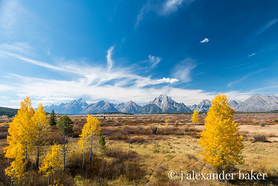 Aspins in the valley of the Snake, Grand Tetons N. P.