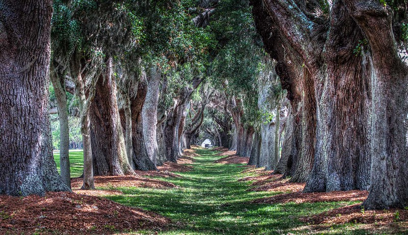 Avenue of the Oaks, St. Simons, Ga.