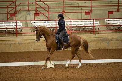 Horse 194