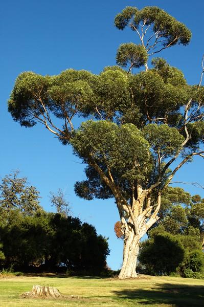 ElysianPark005-TreesOnTopOfHillSouthSide-2006-10-18.jpg