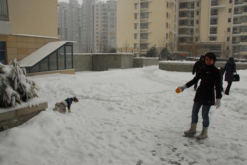 [20100103] 1st 2010 Snow in Beijing (6).JPG