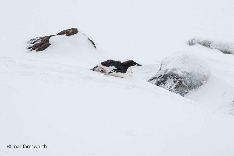 antartica-12-2.jpg
