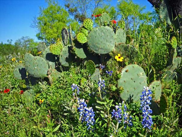 Cactus-and-flowers.jpg