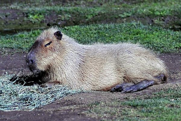12-21-11 Varsity at Santa Barbara Zoo