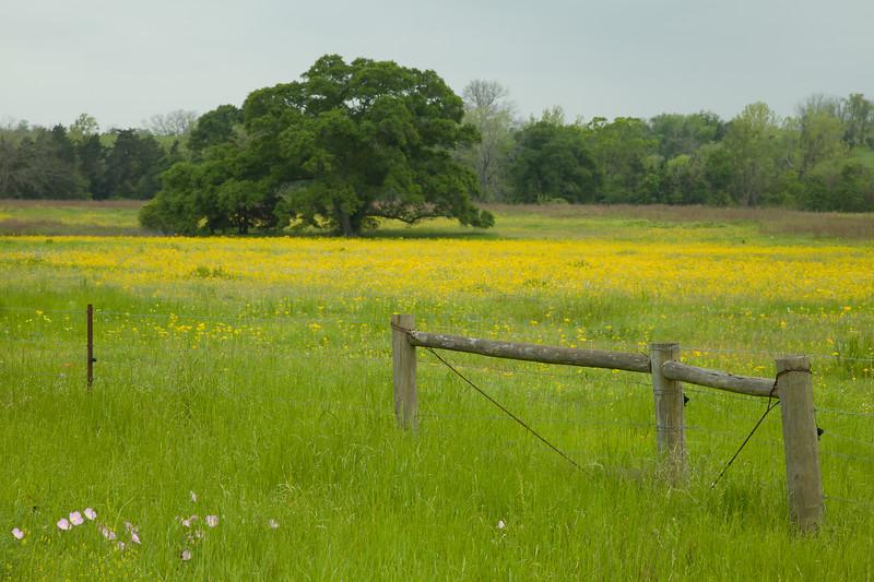 2015_4_3 Texas Wildflowers-7562.jpg