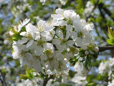 Spring '09