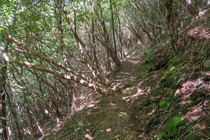 Mountains-to-Sea Trail -- 4,650'
