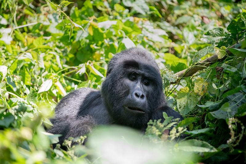 Uganda_T_Gor-885.jpg