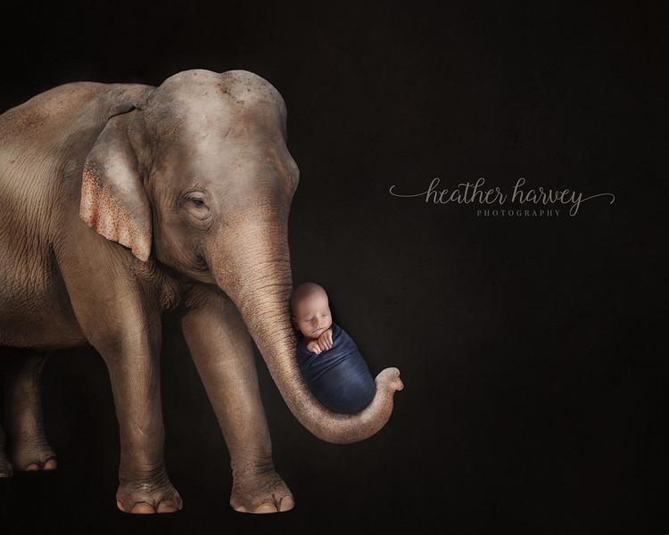 Elephant-on-Black-2-web.jpg