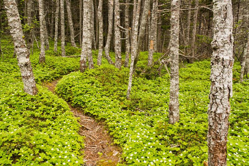 Cape Broyle path