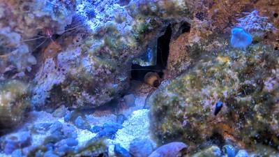 2018-09-17 - Reef Tank update