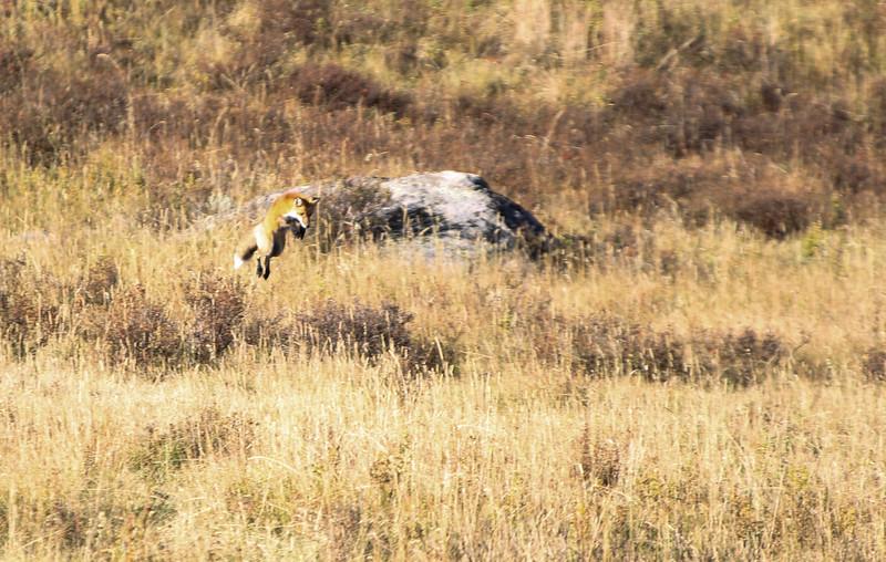 Fall Trip Wyoming & Montana 2016 (52 of 193).jpg