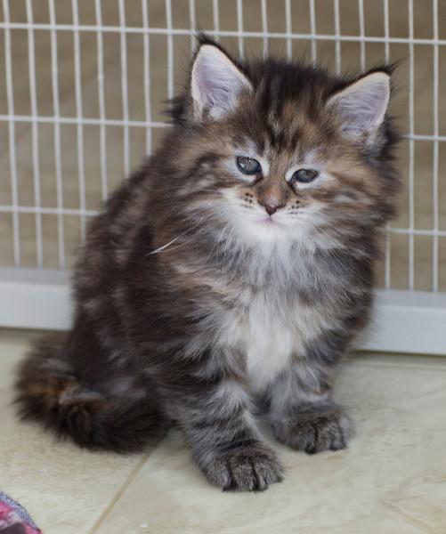 Kittens254.jpg