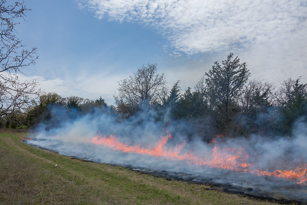 Prescribed Burn for Wildlife Management